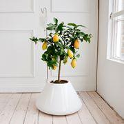 piante per la casa