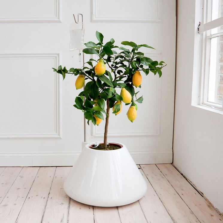 Piante di casa piante da interno pianta da appartamento - Porta piante da interno ...