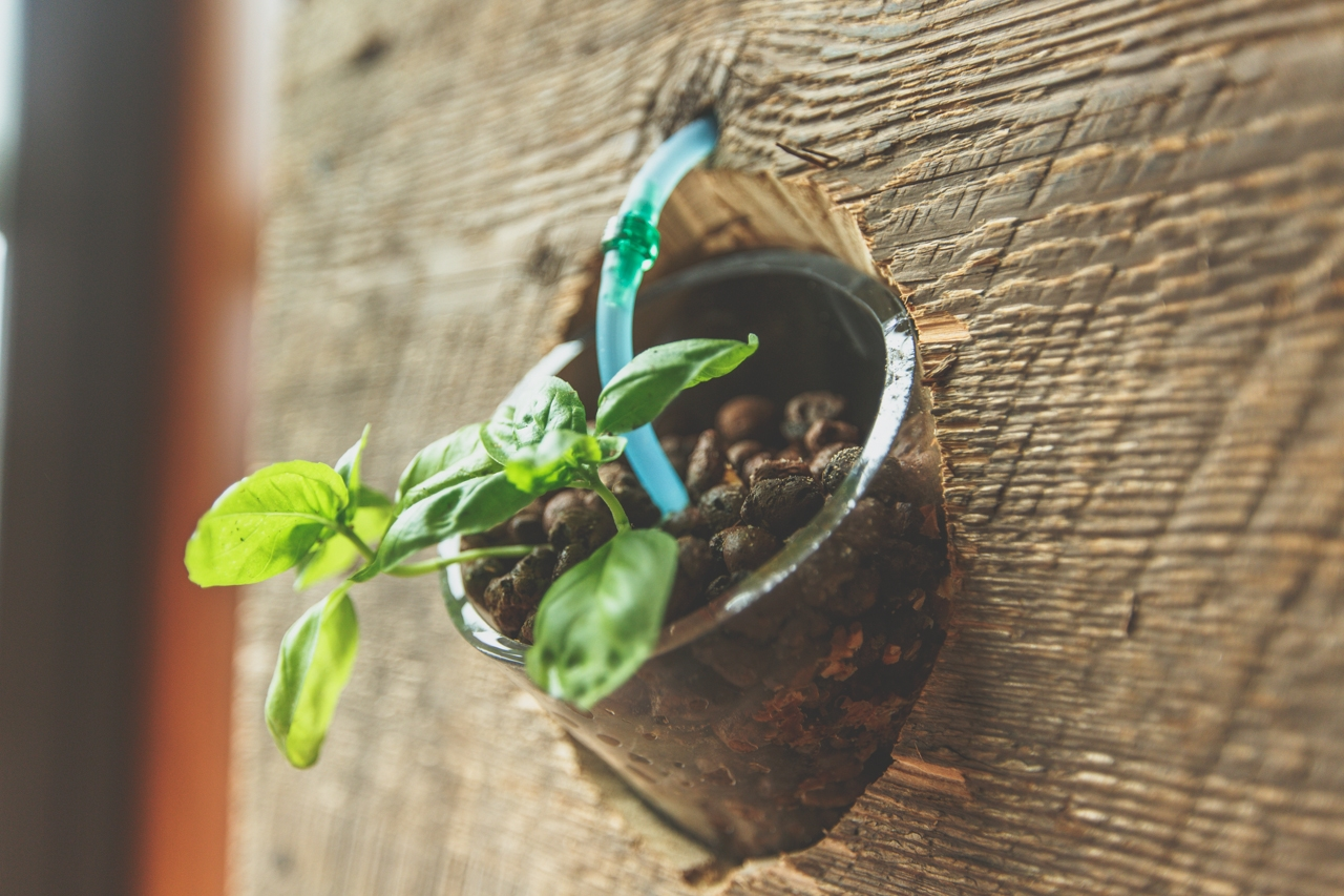 Piante di casa piante da interno pianta da appartamento for Piante appartamento buio