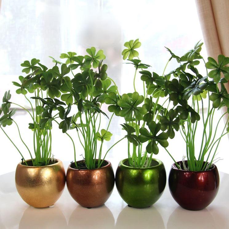 Piante verdi da appartamento - Piante da interno - Scopriamo le piante verdi da appartamento