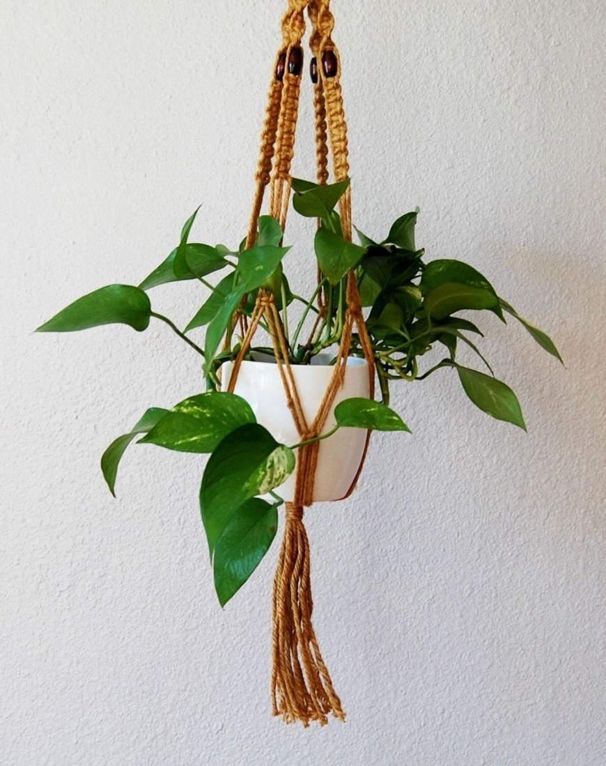 Piante Rampicanti Da Interno potos - piante da interno - potos appartamento