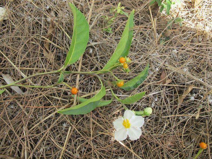 Fiore pianta ornamentale
