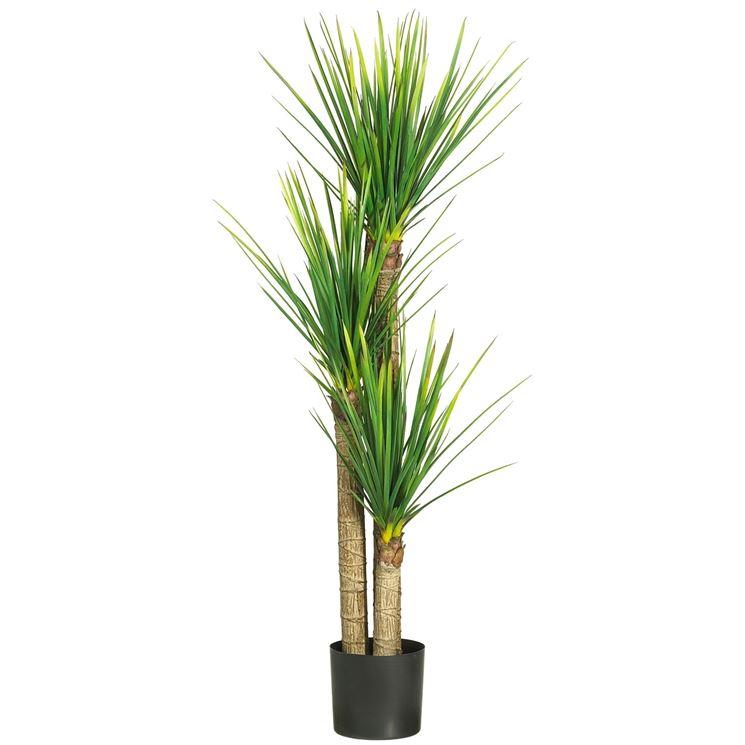 Tronchetto felicit piante da interno tronchetto della for Piante da interno alte