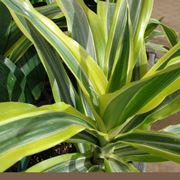 pianta da interno