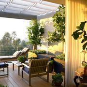 alberi balcone