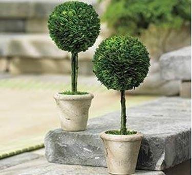 Casa moderna roma italy alberi in vaso da esterno for Alberelli da vaso per esterno