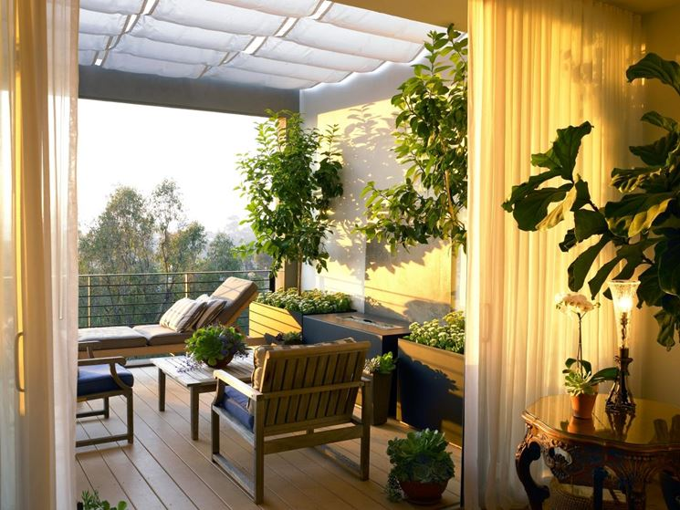 Alberi da balcone - Piante da terrazzo - Alberi per il terrazzo