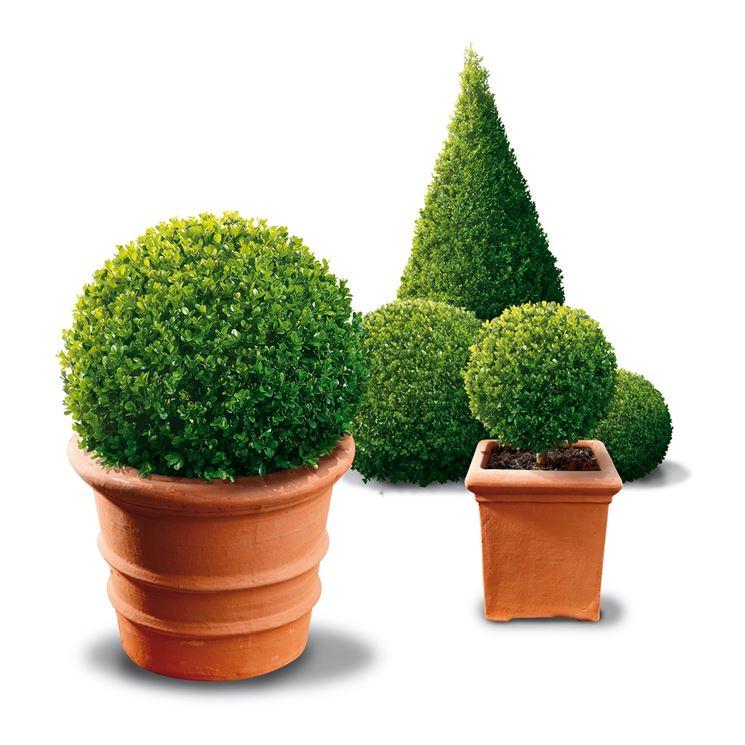 alberi da balcone piante da terrazzo alberi per il