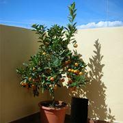 piante alte da terrazzo