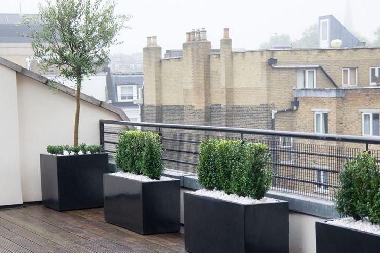Alberi da terrazzo piante da terrazzo alberi per il for Alberelli da vaso per esterno