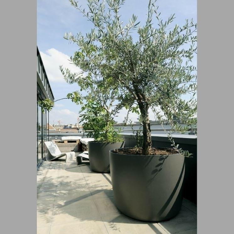 Alberi da terrazzo - Piante da terrazzo - Alberi per il balcone