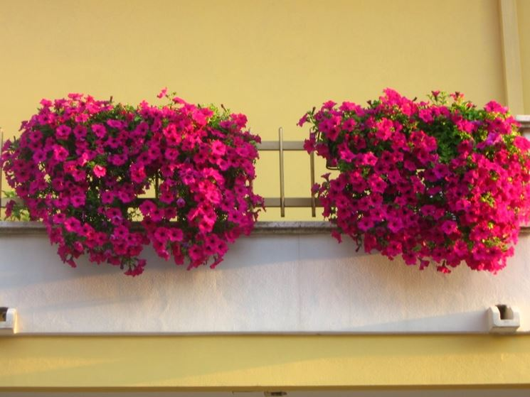 Arredo terrazzo piante da terrazzo come arredare il for Fiori da terrazzo
