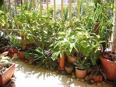 Coltivare sul balcone piante da terrazzo piante da balcone for Piante da terrazzo