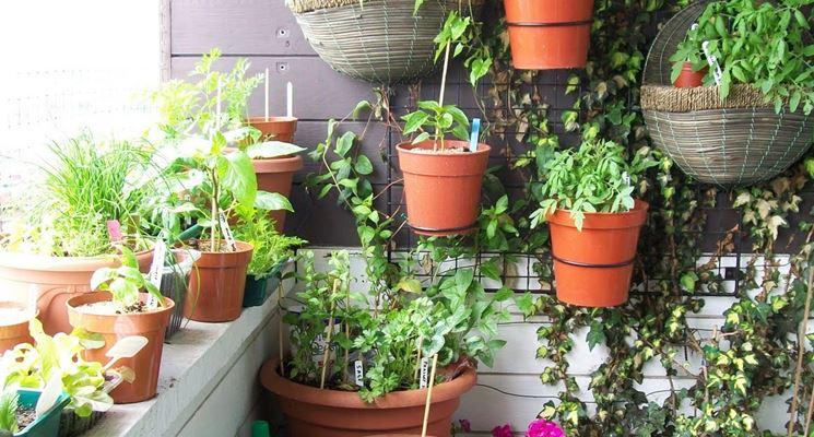 Coltivare sul balcone piante da terrazzo piante da balcone for Arredare un terrazzo con piante e fiori