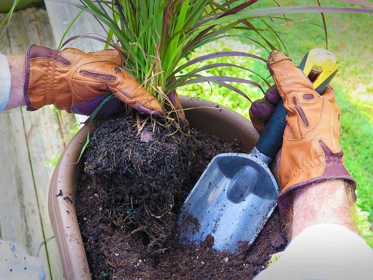 coltivare sul balcone