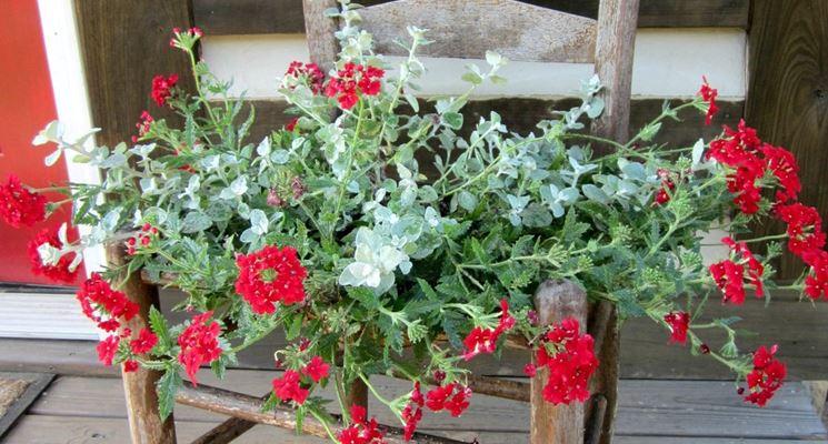 Come decorare il terrazzo con le piante di verbena - Decorare il terrazzo ...