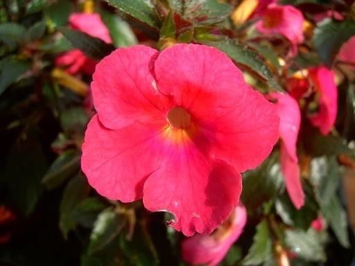 Fiori balcone piante da terrazzo i migliori fiori per for Migliori piante da terrazzo