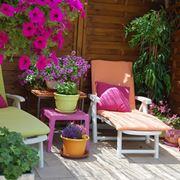 fiori per terrazzi