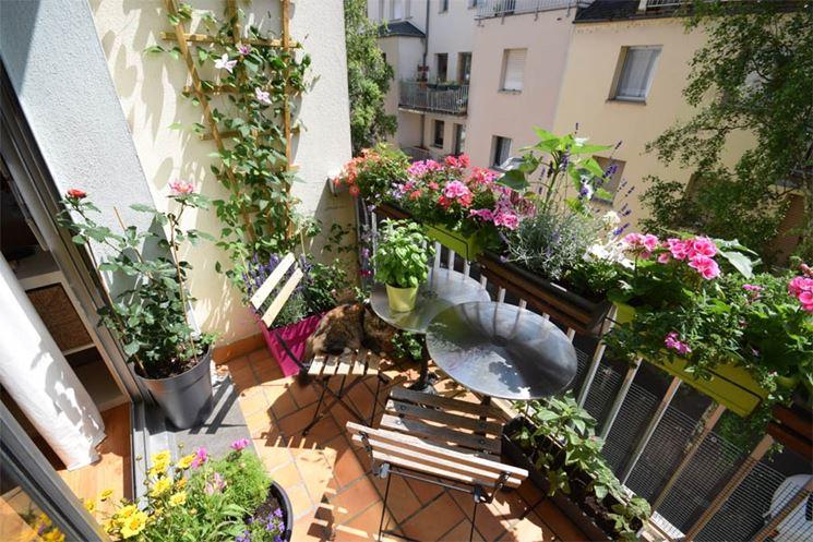 Fiori per terrazzi piante da terrazzo quali fiori per il terrazzo - Arredare balconi e terrazzi ...