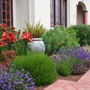Giardino pensile - Piante da terrazzo - Realizzare ...
