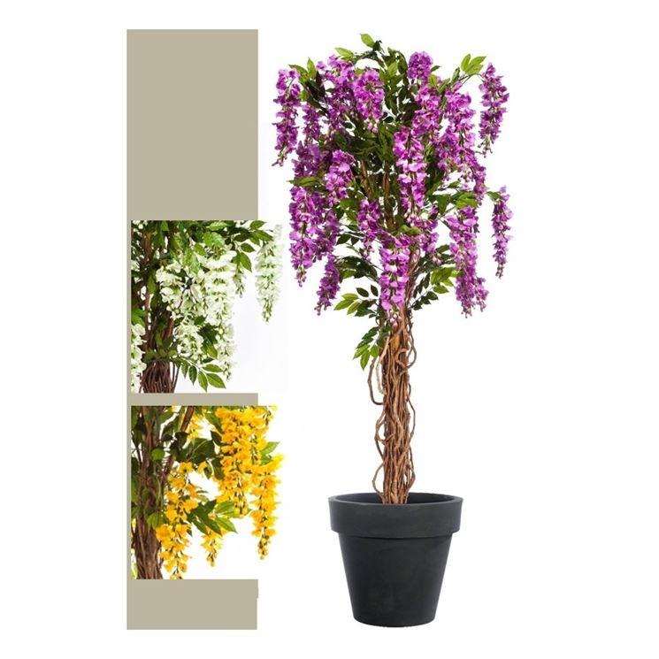 Una pianta di glicine rampicante