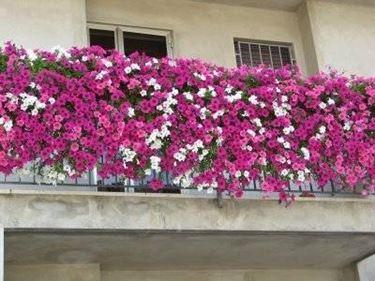 piante balcone - Piante da terrazzo - Piante per balcone