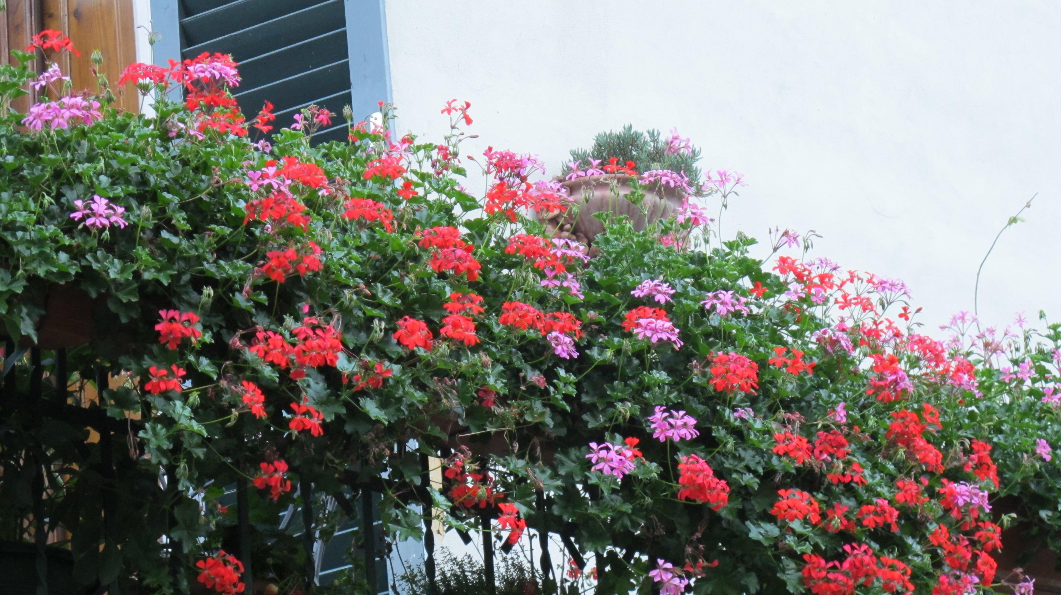 piante balcone piante da terrazzo piante per balcone