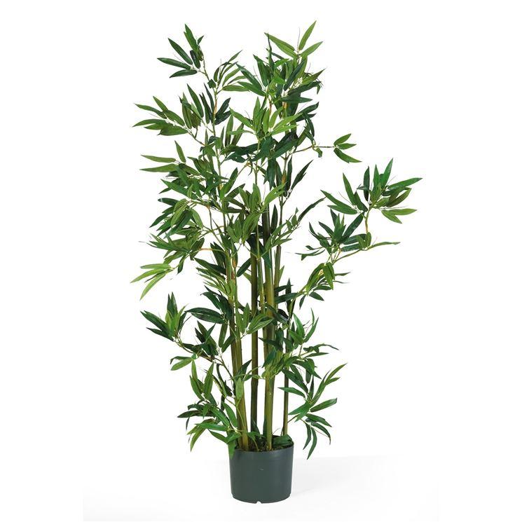 Piante da balcone sempreverdi piante da terrazzo - Sempreverde da giardino ...