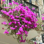 piante da balcone