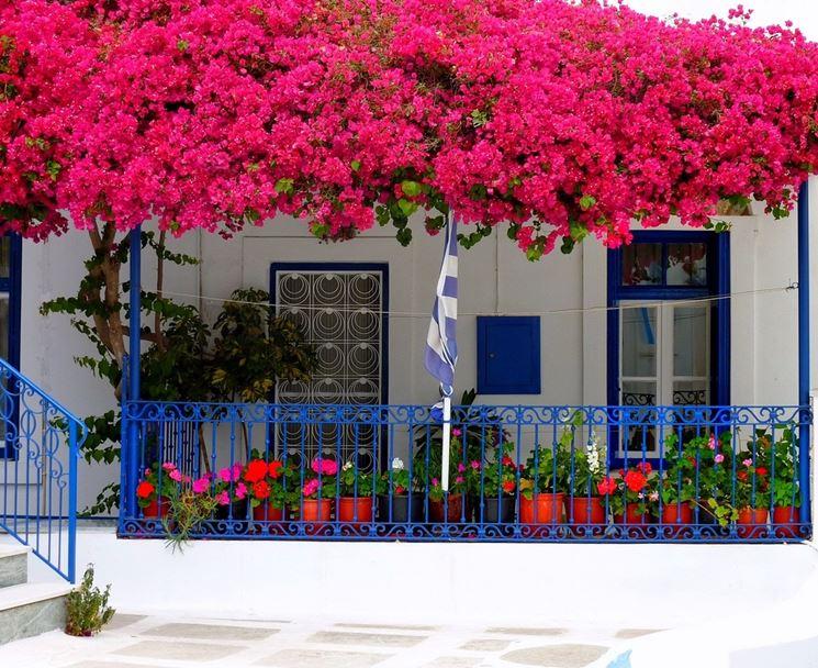 piante da balconi - piante da terrazzo - piante balcone - Piante Sempreverdi Da Vaso Resistenti Al Freddo E Al Caldo