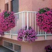 piante da balcone resistenti al sole e al freddo