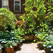 piante sempreverdi da terrazzo