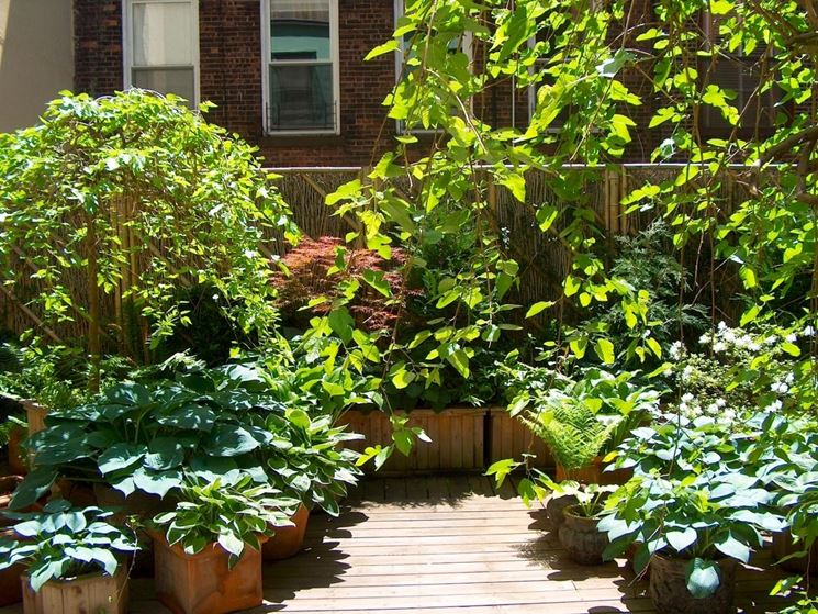 piante da terrazzo sempreverdi piante da terrazzo
