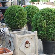 Piante da balcone sempreverdi piante da terrazzo for Piante da esterno in vaso perenni