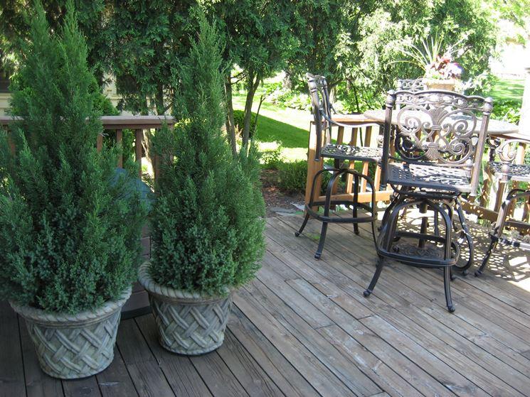 Piante da vaso sempreverdi piante da terrazzo piante for Piante da cespuglio