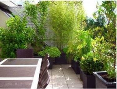 piante da terrazzo perenni idea creativa della casa e