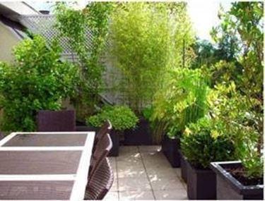 Piante in terrazzo piante da terrazzo - Piante da terrazzo sempreverdi ...