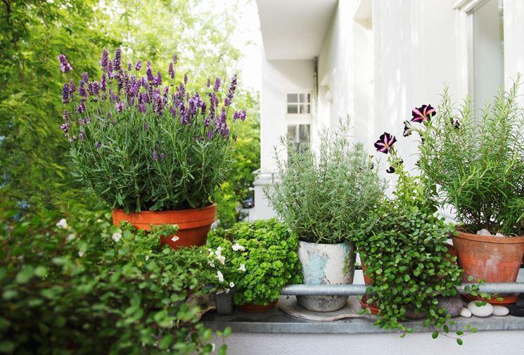 piante per terrazze