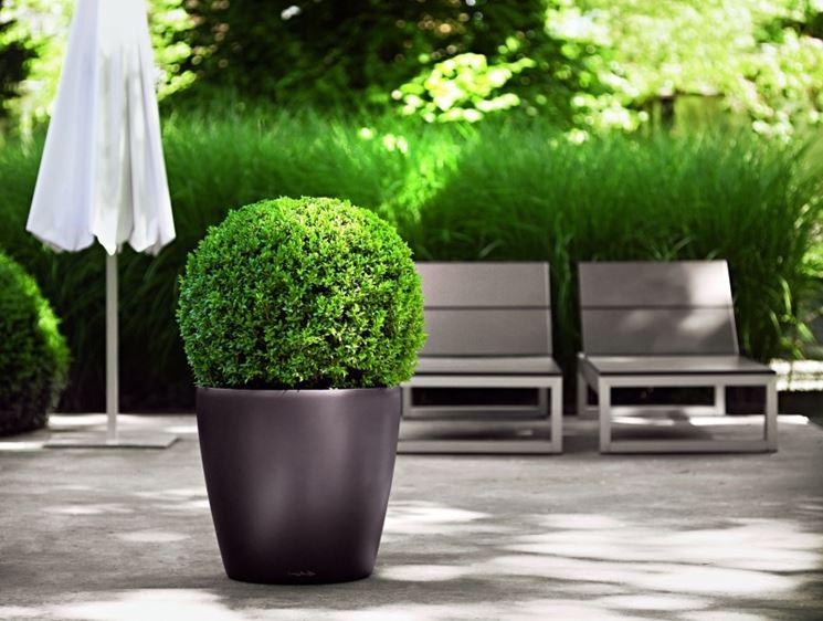 Piante per terrazze piante da terrazzo piante per terrazzo for Piante da terrazzo sempreverdi