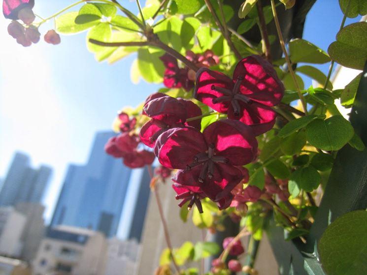 fiori su balcone