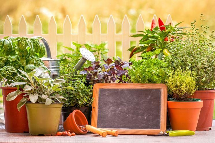 piante aromatiche terrazzo