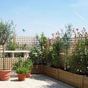 piante da vaso per terrazzo