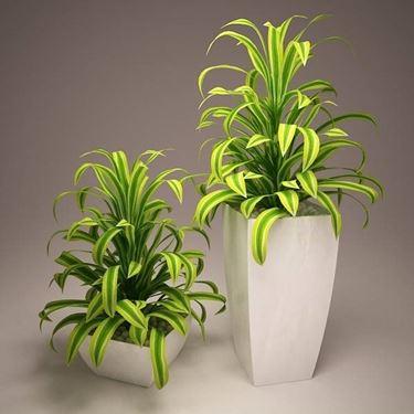 Piante vaso piante da terrazzo for Piante ornamentali da terrazzo