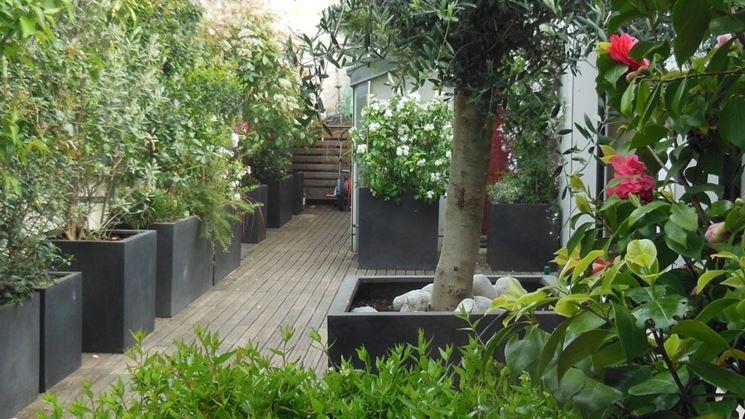 Piante vaso - Piante da terrazzo - Coltivare piante in vaso