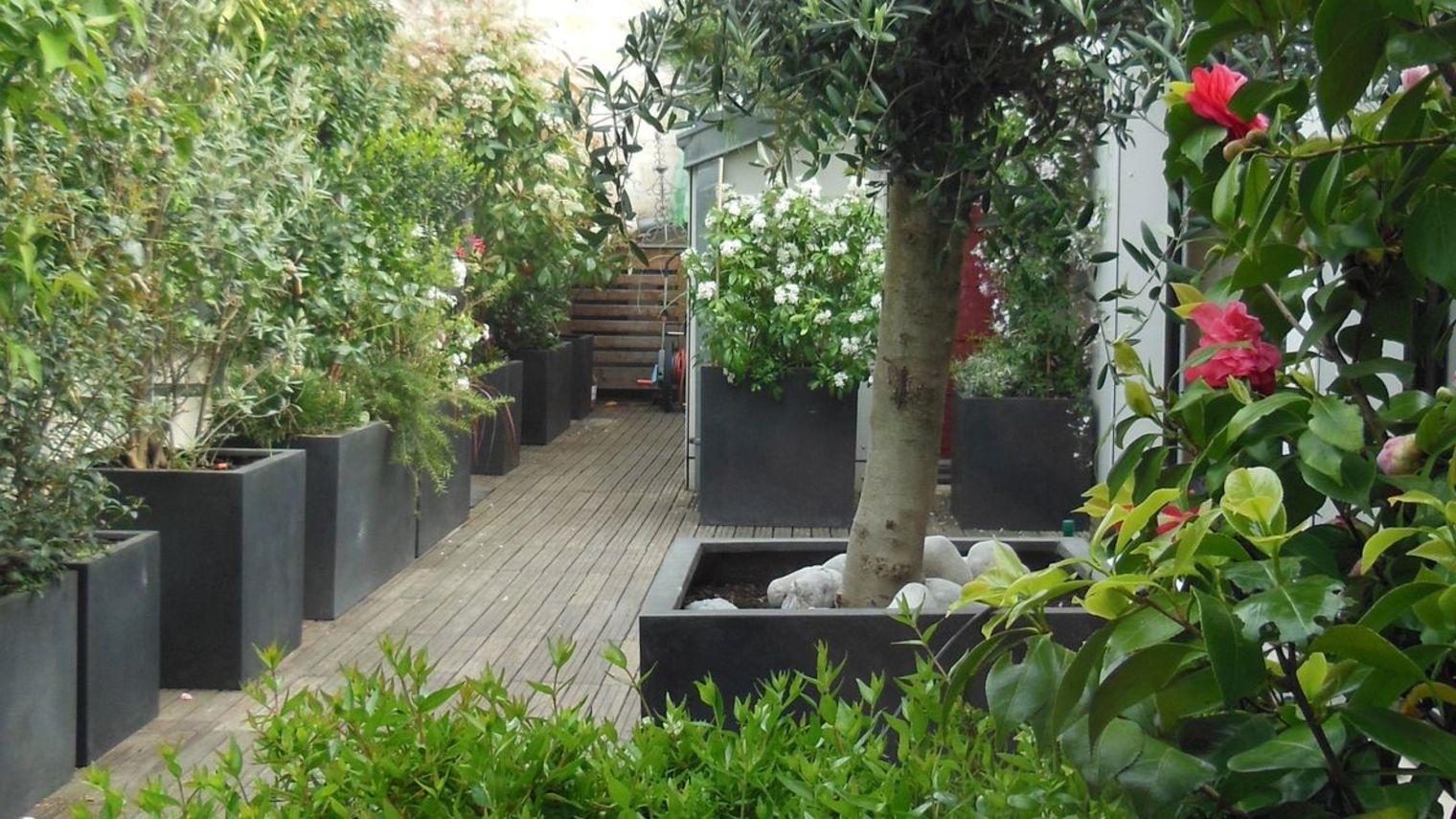 Piante vaso piante da terrazzo for Piante da terrazzo sempreverdi