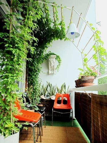 piante da balcone outdoor : piante verdi da balcone - Piante da terrazzo