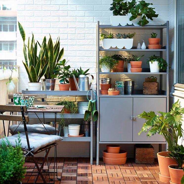 Piante verdi da balcone piante da terrazzo piante verdi per il terrazzo - Piante per il terrazzo ...