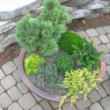 sempreverdi da terrazzo piante da terrazzo
