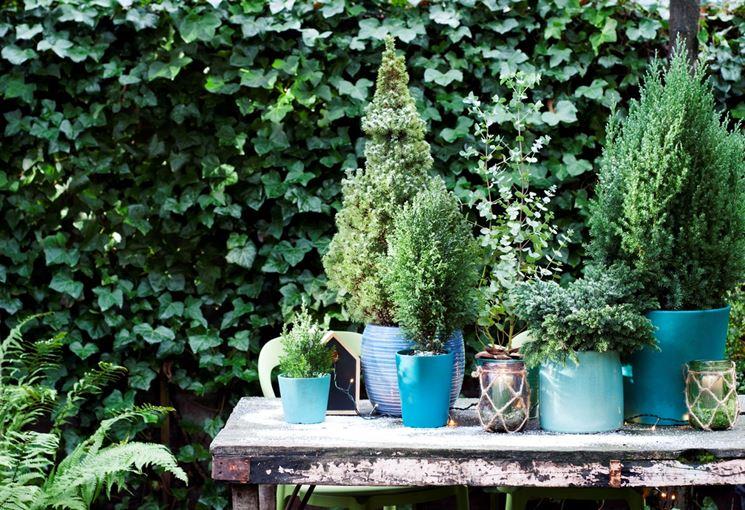 Sempreverdi da terrazzo piante da terrazzo scegliere - Erba vera sul terrazzo ...