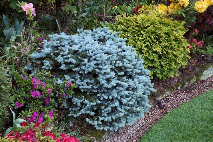Sempreverdi da terrazzo piante da terrazzo scegliere - Piante terrazzo autunno ...